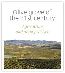 banner-olive