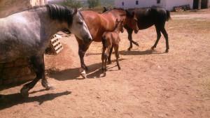 EVOO_Horse_Castillo_de_Canena_2