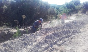 cipreses_cypresses_sustainability_castillo_de_canena_1