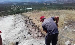 cipreses_cypresses_sustainability_castillo_de_canena_3