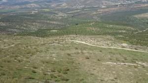 Reforestación_autóctona_Cortijo_Guadiana (2)
