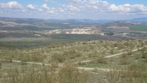 Reforestación_autóctona_Cortijo_Guadiana